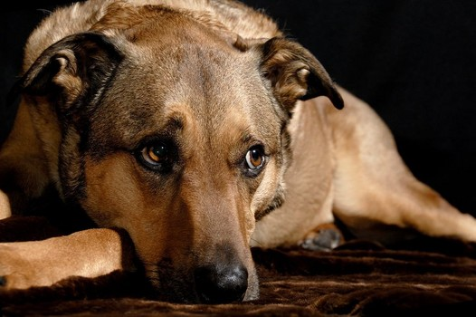 North Dakotan to Stop Animal Cruelty - Don't Be Cruel.org
