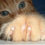 What You Need to Know about Declawing Cats
