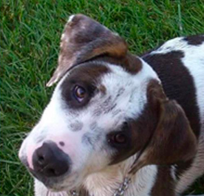Bailey - Pet of the Day - Don't Be Cruel