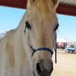 Cloud the Horse from Shiloh Horse Rescue - Don't Be Cruel