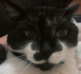 Felixx the Cat - Pet of the Day - Don't Be Cruel