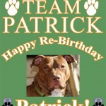 On behalf of all the members of Team Patrick - Happy Re-Birthday, Patrick. Facebook.com/StopThe Abusing Don't Be Cruel Animal Cruelty Awareness site