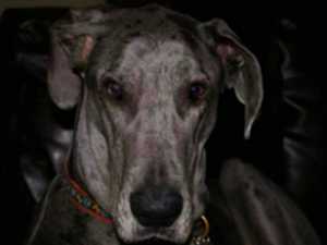 Jupiter - Pet of the Day - Don't Be Cruel