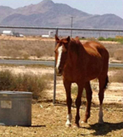 Kerk the Horse - Shiloh Horse Rescue - Pet of the Day - Don't Be Cruel