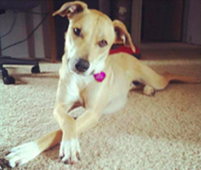 Lucy - Pet of the Day - Don't Be Cruel