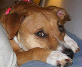 Molly - Pet of the Day - Don't Be Cruel