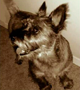 Pip - Pet of the Day - Don't Be Cruel
