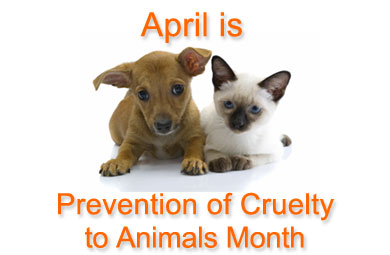 April is the Prevention of Cruelty to Animals Month