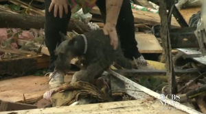 CBS News Crew finds dog in Oklahoma tornado rubble as they conduct an interview