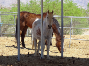 Shiloh Horse Rescue in Nevada - Don't Be Cruel