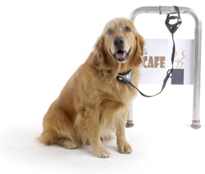 steel cable reinforced leash by Pawz