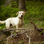 Lyme Disease Concern Among Pet Parents Nationwide