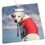 CFO Dog Luggage Tag Review