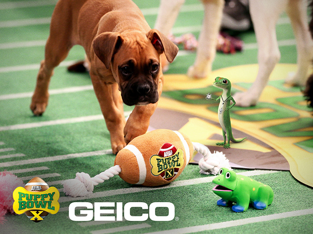 Puppy Bowl X - New York