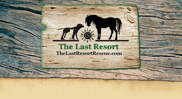 The Last Resort Animal Rescue
