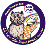 Cairn Terrier Rescue