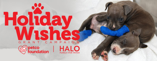 Petco Foundation Halo Pets Holiday Wishes 2014