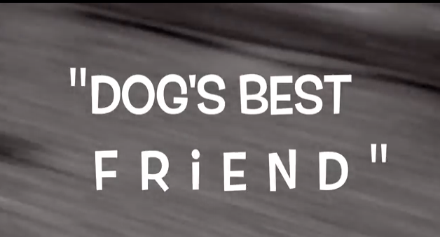 Dog's Best Friend #RescueFilm by Halo Pets