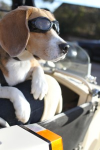 Sit Stay Ride: The Story of America's Sidecar Dogs