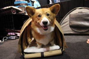 Pet Carrier for Corgis