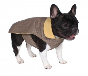 French bulldog with trench coat