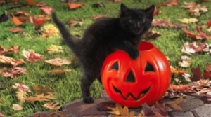Hallow Pet Safety Tips