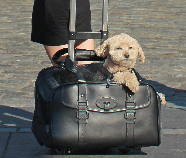 Darien pet carrier - A pet with paws