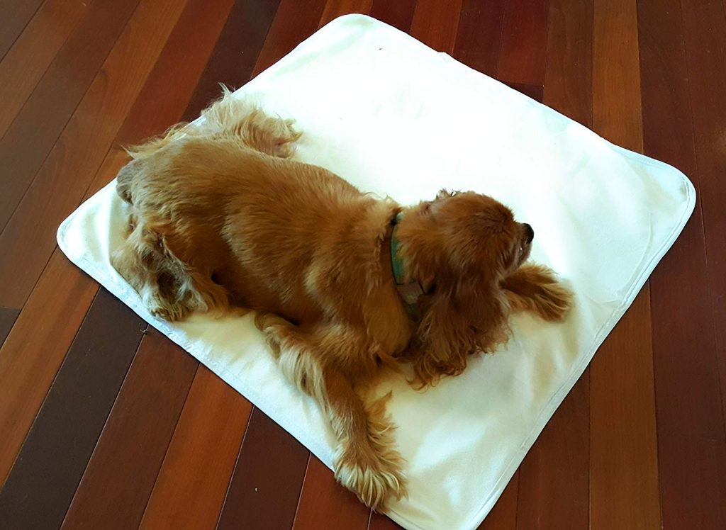 sustainable pet pads