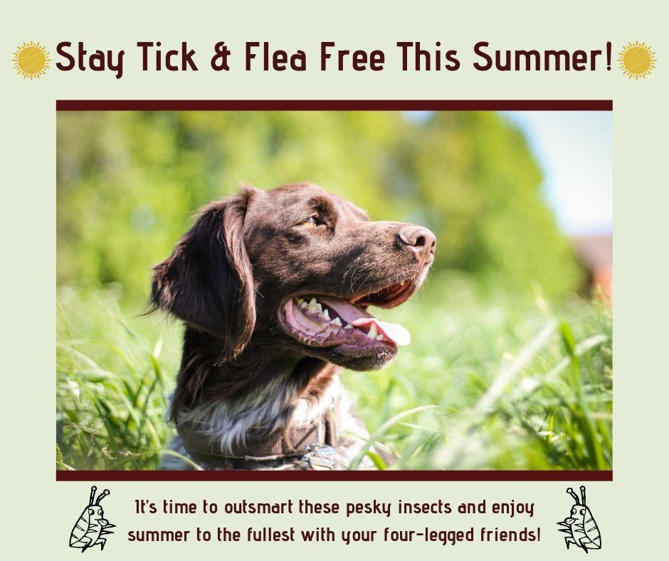 Stay tick and flea free this summer