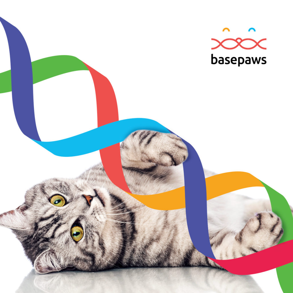 Basepaws cat kit