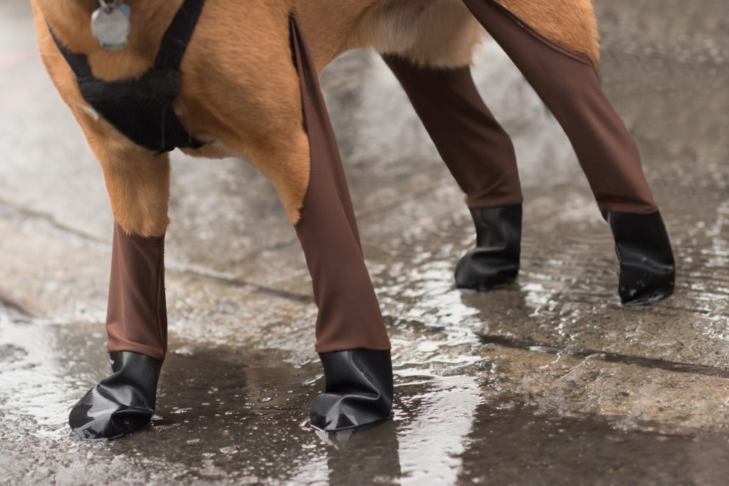 Protect your pups paws from winter